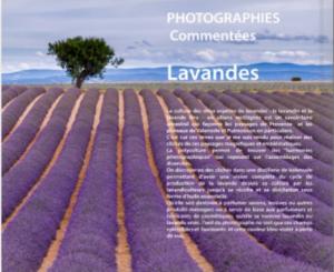 Lavandes livre 4Couv 300x245 Sortie du Livre : Lavandes   Collection Photographies