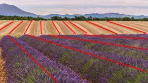 lignes 300x169 Le commentaire critique dune photographie