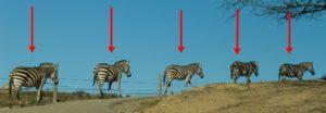 repetition 300x104 Le commentaire critique dune photographie