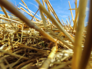 DJI 70 300x225 Mon Aventure Drone : Photos, Vidéos et... le Crash