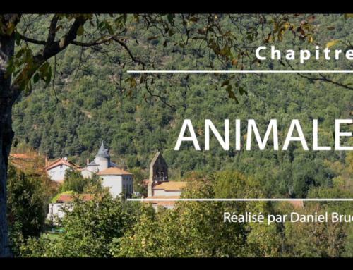 Animales – Histoire d'automne