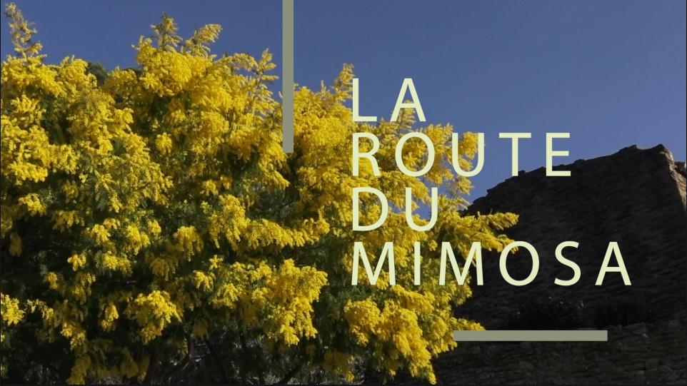 La Route du Mimosa