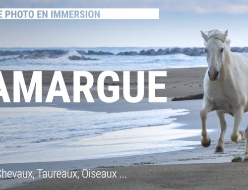 Stage Photo Camargue – Chevaux, Taureaux, Oiseaux en action en bord de Mer et dans les Marais