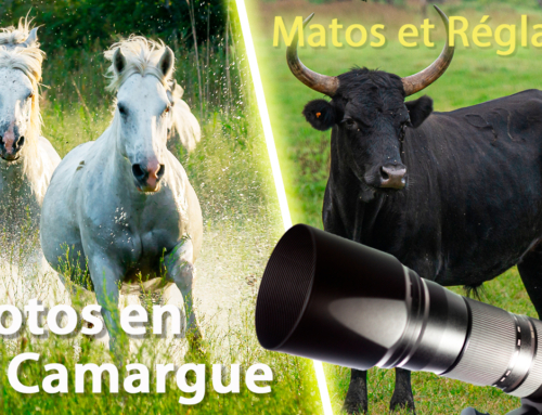 Quel Matos et quels réglages pour photographier en Camargue ?