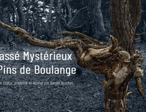 Nouvelle vidéo – Le passé mystérieux des pins de boulange